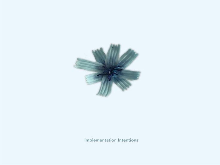 Implementation Intentions - Chichorei