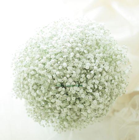クラッチブーケ かすみそうだけで ルヴェソンヴェール駒場さまへ : 一会 ウエディングの花
