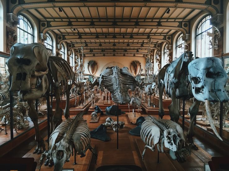 25 best ideas about museum histoire naturelle paris on for 57 rue cuvier jardin des plantes