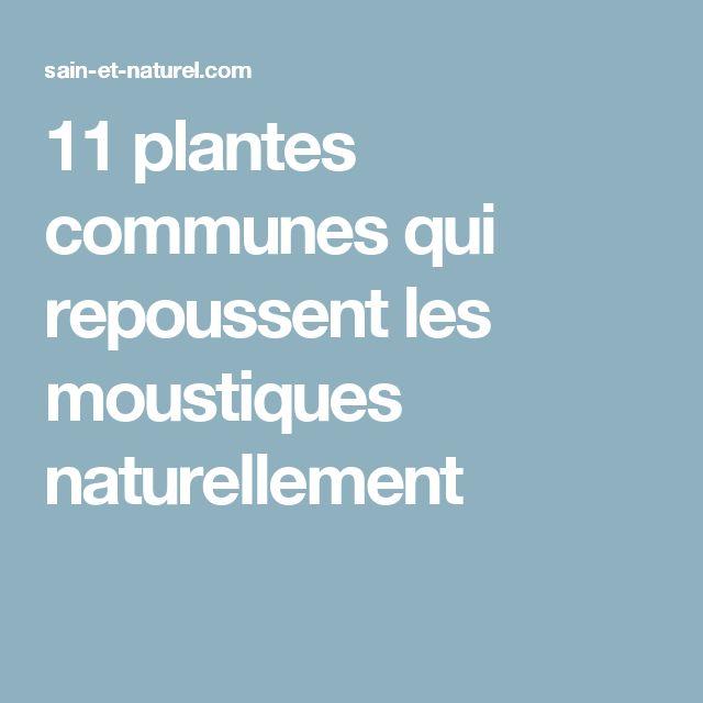 11 plantes communes qui repoussent les moustiques naturellement