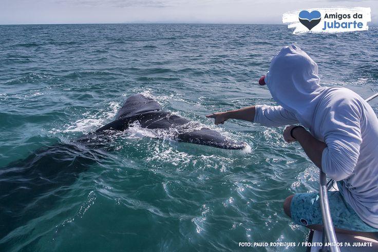 Um marco do turismo de observação de baleias-jubarte em Vitória-ES!