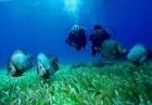 Curso Resort de buceo para principiantes en Cancún con Aquaworld