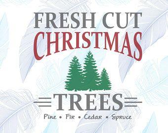 Best 25 Fresh Cut Christmas Trees Ideas On Pinterest