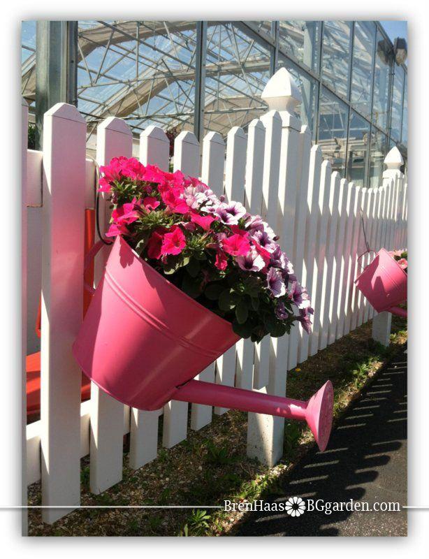 Petunia Container at Benches Garden Center in Ohio