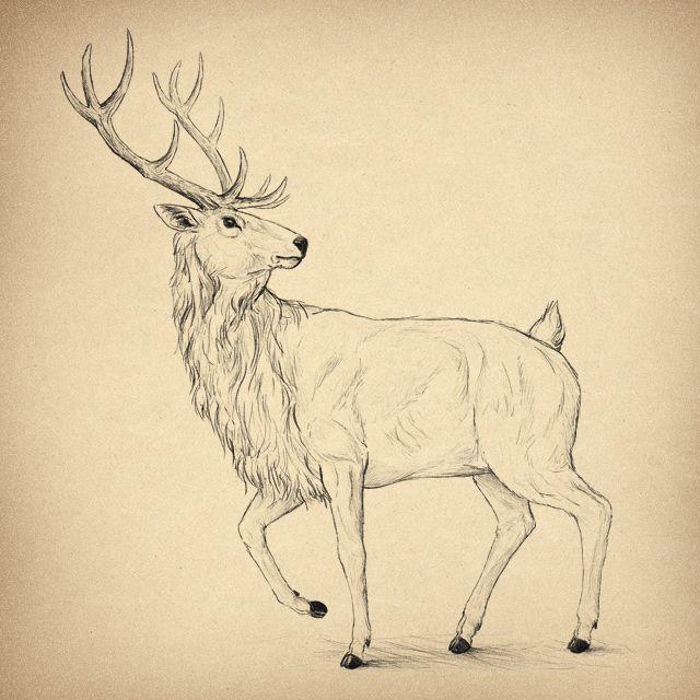13 Best Moose Images On Pinterest Moose Elk And Mousse