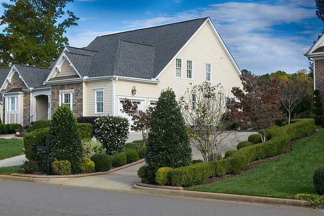 25 best ideas about tall shrubs on pinterest backyard landscaping privacy backyard trees and - Landscape elements that you should consider for your yard ...