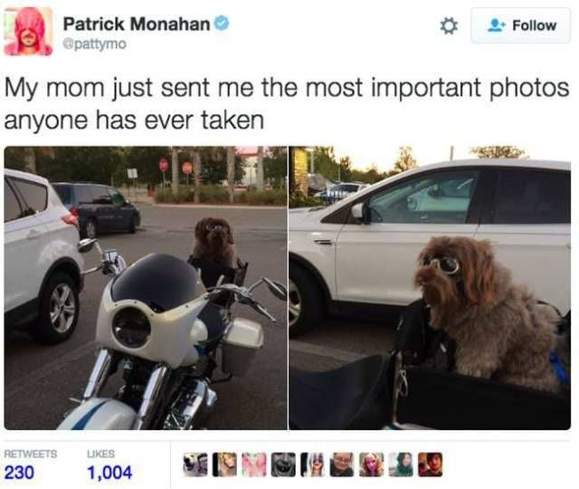Most Popular Memes About Dogs (27 Pics)