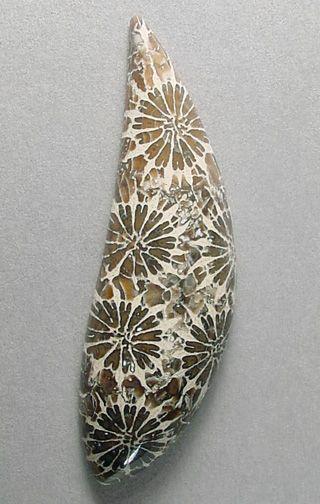 Fossilized coral, from Indonesia. Cabochon cut by Sam Silverhawk http://samsilverhawk.com/gems1.html