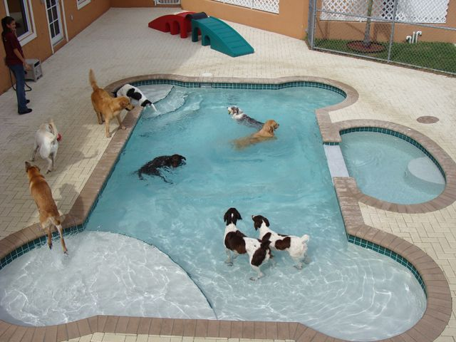 How cool is this? This must be a doggie daycare (or a very rich animal lover). Dog Bone Shaped Pool