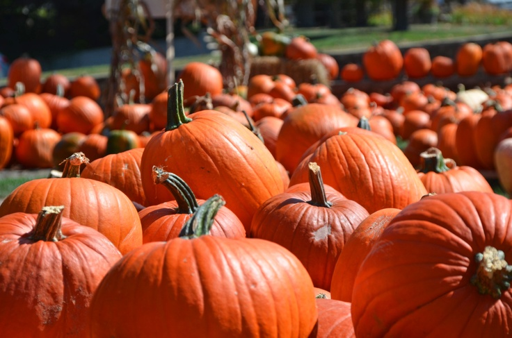 Pumpkin Patches, Corn Maze, Ghost Walks and More. Bryson City is full of fall family fun!