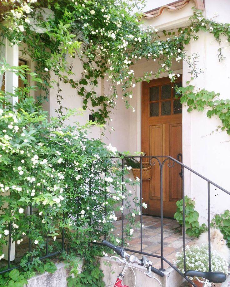 今日は暑いくらいポカポカ陽気 空気入れ換えして掃き掃除してお庭からローズマリーを摘んできて意味もないのにモッコウバラのそばをうろうろして()いい香り  #お家#玄関 #モッコウバラ#花 #ポカポカ陽気#ガーデン #暮らし#わんこ #レンガ#アイアン #garden#mygarden#rose#flower#dog#myhome by cotori.s