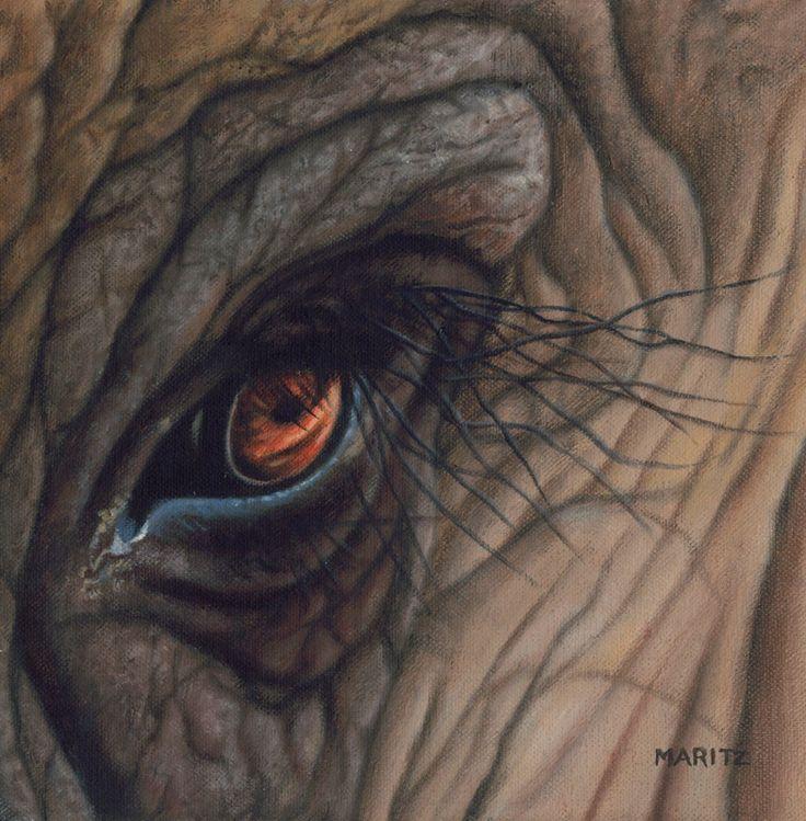 Big 5 EYE : Elephant
