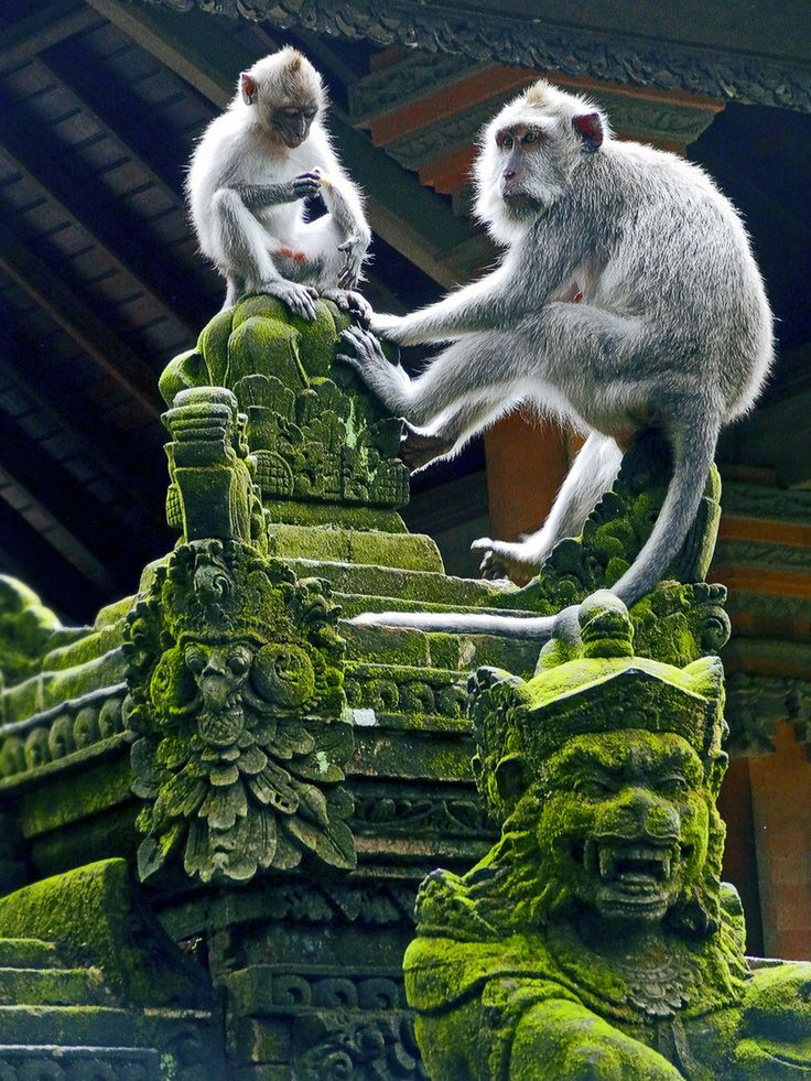 Monkey forest in Ubud, Bali with the Monkey King in the foreground.