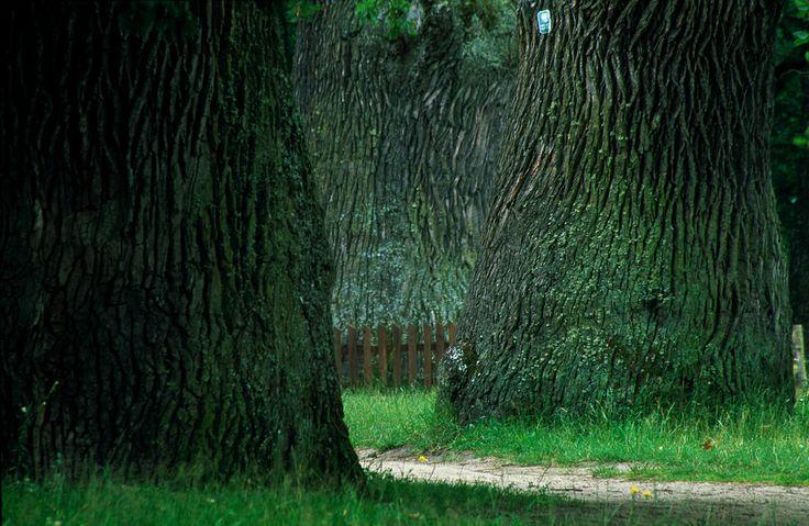 Roztoczański Park Narodowy / Roztocze National Park | Flickr - Photo Sharing!