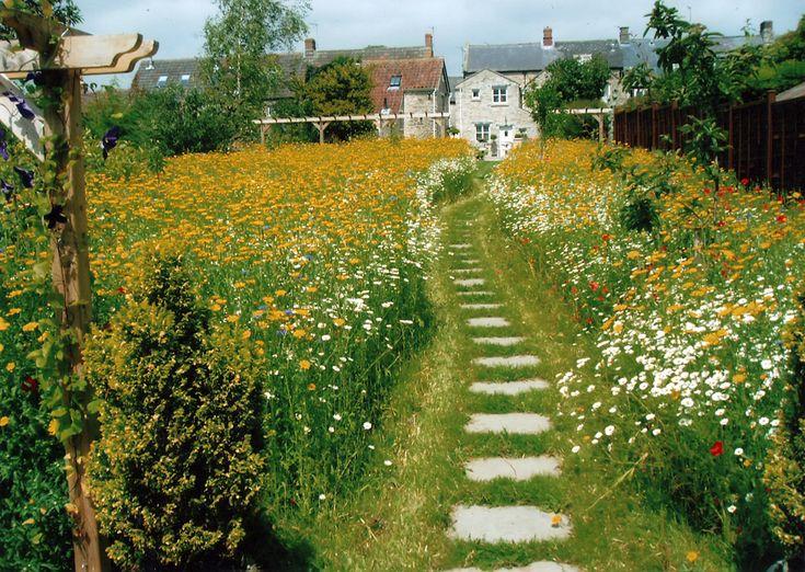 25 best ideas about meadow garden on pinterest wild flower meadow wild flower gardens and - Garden design ks ...