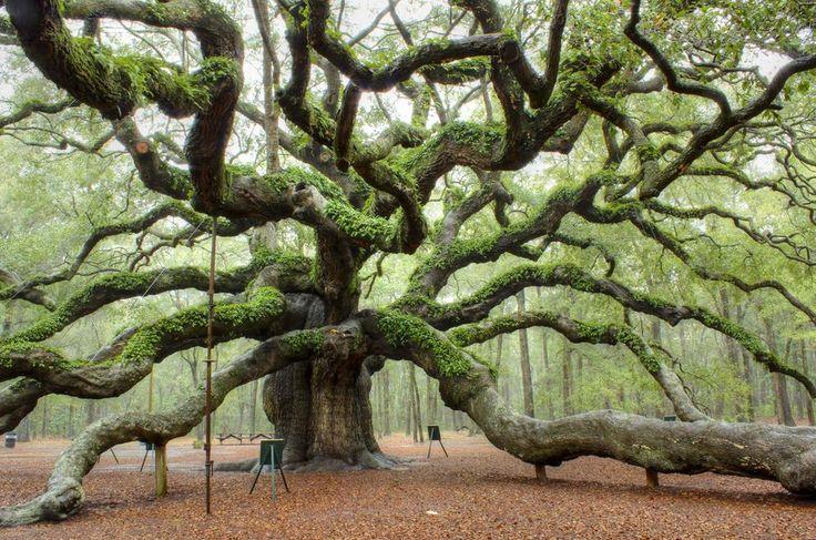 As 20 árvores mais famosas e bonitas da terra!