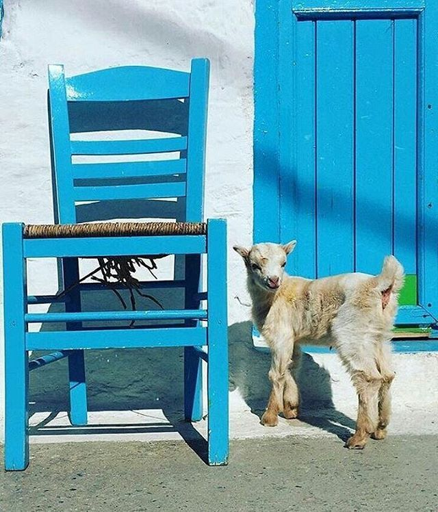 "Perfect Greece™  (@perfect_greece) στο Instagram: ""Visit the lovely island of #schinoussa, on #cyclades!  By @chrieco29. Congratulations """