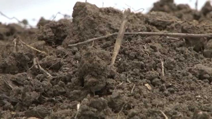 #Soils Support #Health, International Year of Soils 2015 #IYS2015