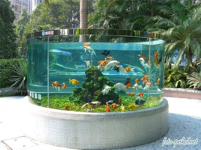 Outdoor goldfish tank i would love this if i lived in a for Goldfish pond ideas