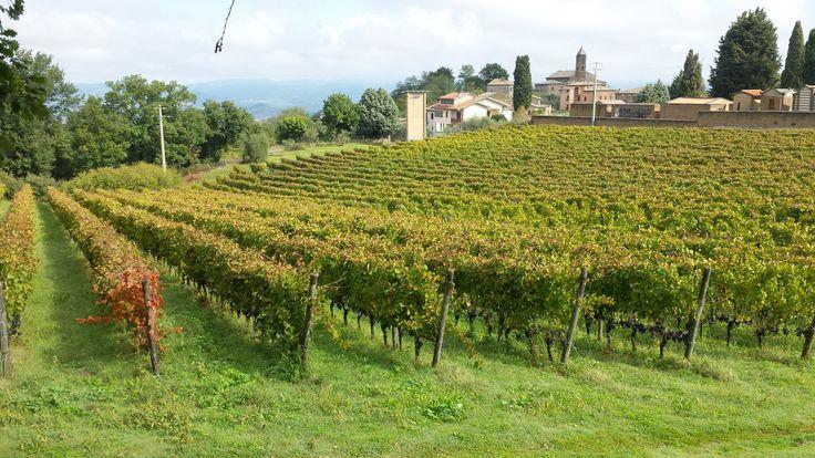 Tra le dolci colline orvietane vicino al lago di Bolsena vi è immersa l'azienda vitivinicola Madonna del Latte a 450 metri di altitudine, località Sugano. In questo ottobre, dove l'autu…