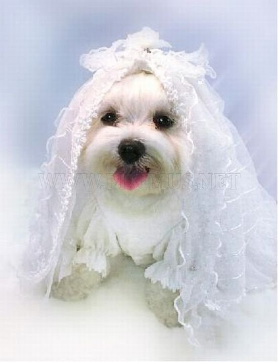 68 best Pet Weddings images on Pinterest | Receptions, Wedding and Pup