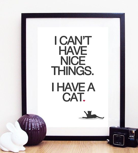 {I can't have nice things. I have a cat.}: Cat Posters, Leather Couch, Posters Prints, Quote, My Life, Nice Things, So True, Kid, Animal