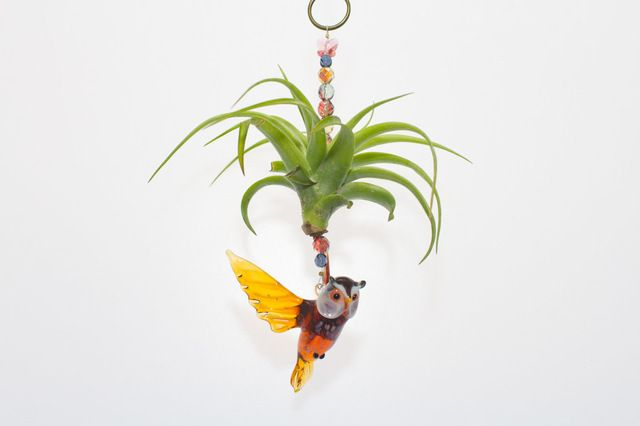 Tillandsia Brachycaulos Air Plant with Murano Lampwork Barn Owl eclectic-decorative-objects-and-figurines