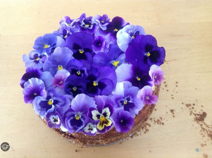 Baked Cheesecake with Violas