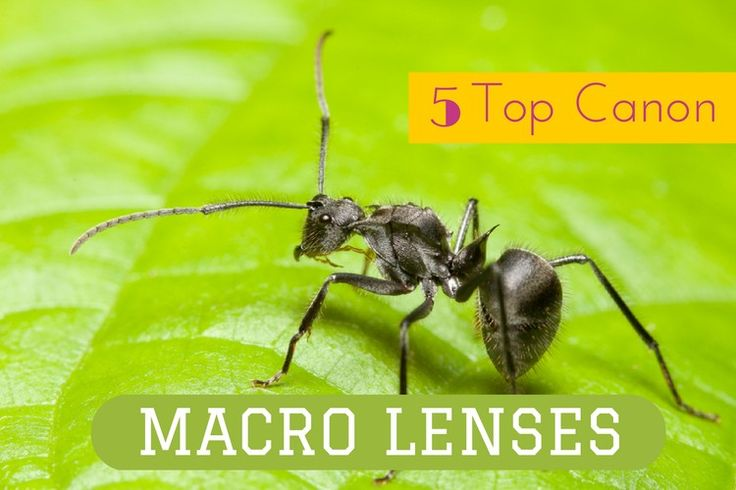 How to find the Best Canon Macro Lens  http://photoworkout.com/best-canon-macro-lenses/