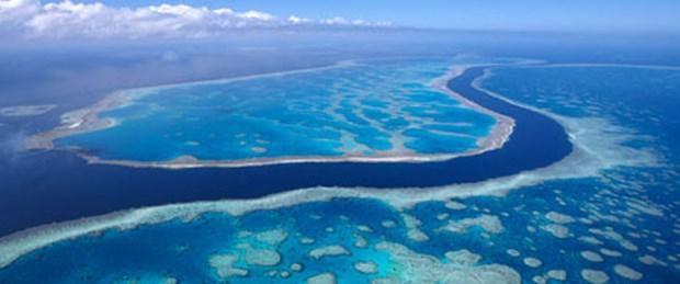 """Birleşmiş Milletler Eğitim, Bilim ve Kültür Örgütünden (UNESCO), Avustralya'daki Büyük Set Resifi'nin """"tehlike altındaki"""" Dünya..."""