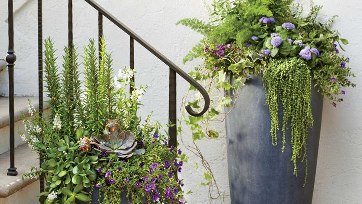 Modern Freestanding Container - 121 Container Gardening Ideas - Southern Living - A planter in a faux-lead finish is a timeless choice, but the cylindrical shape of these tall fiberclay urns gives them a really clean feel. Having a different color or texture helps the color pop. Here, string of pearls creates plenty of textural drama and purple calibrachoa and blue ageratum add just the right dose of color.