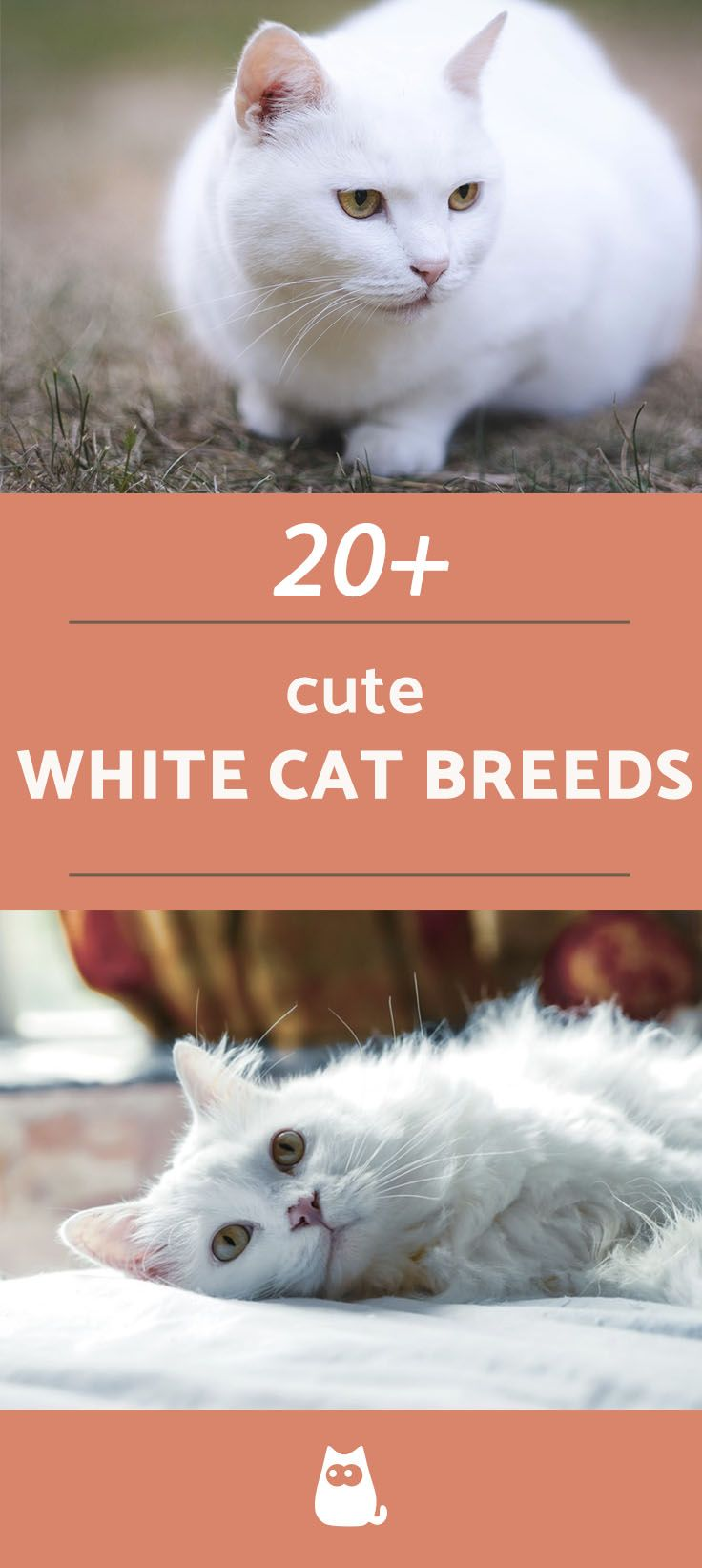 White Cats Breeds Names