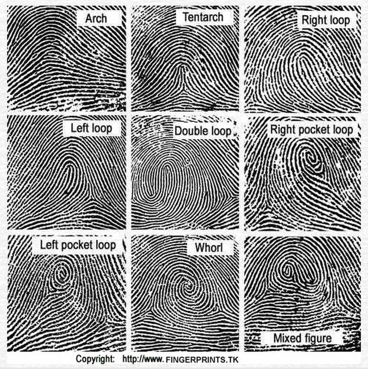 fingerprint types - Google Search