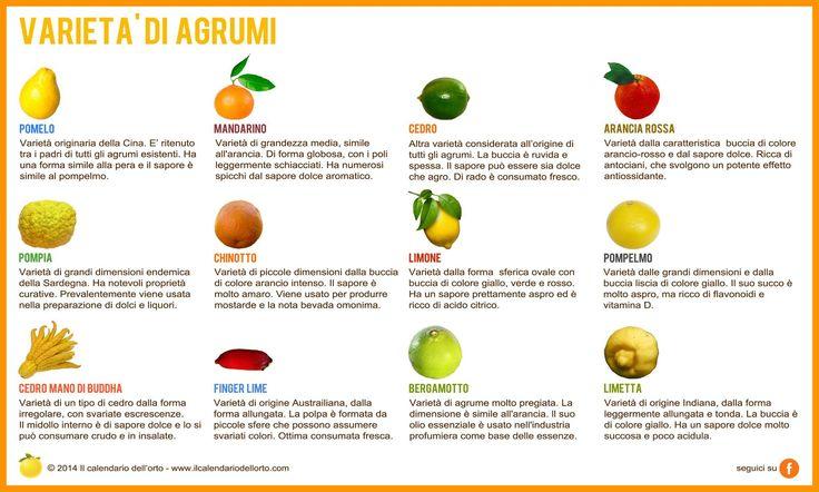 Varietà di Agrumi