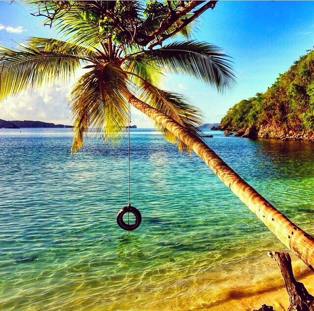 Palm Tree Beach: (Tire Swing) Beaches, Islands, Relax, Water, Vacations