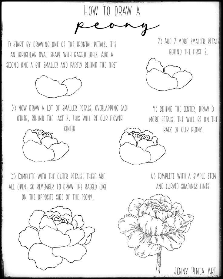 House plants peony drawing tutorial peony drawing
