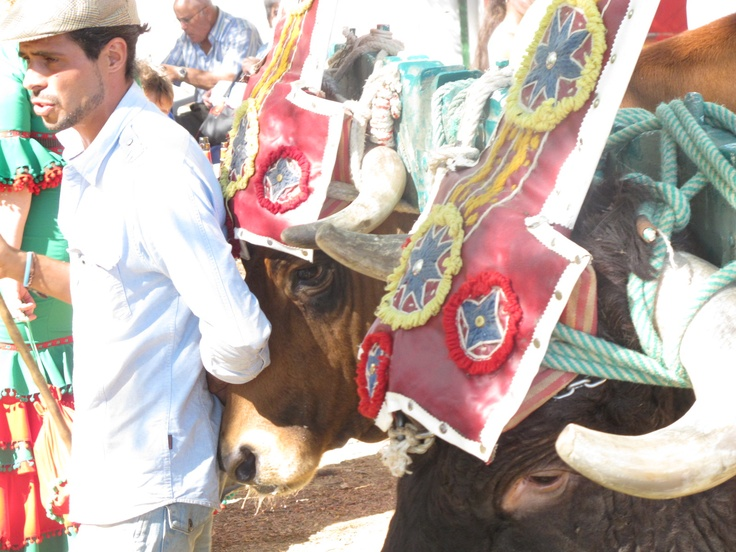 Ox driver with oxen wearing fabulously colourful headpieces, Romeria de Torrijos.