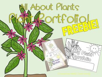 Teaching plants in primary is a fun way to integrate science. There is so much that can be done with students. You can use this plant portfolio cover page to turn a regular folder into a place where students can keep all their work on plants. Then, at the end of the unit send it home!