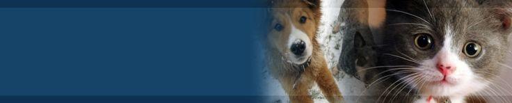 Humane Society of Muskegon County