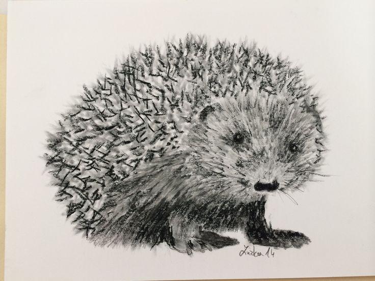 kresba ježka tužkou a uhlem od Zuzky Dušánkové