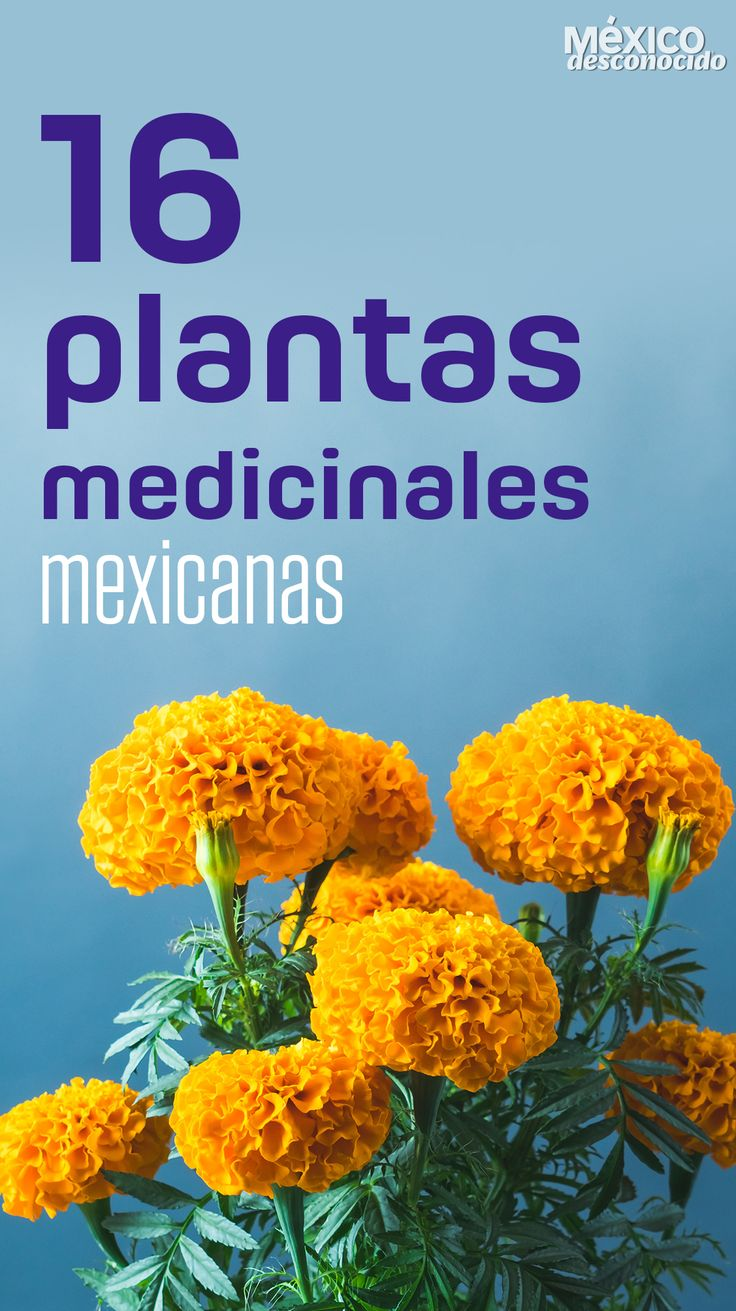 Medicinal Plants, Medicine, Remedies, Herbs, Vegetables, Healthy, Food, Ideas, Purple Orchids