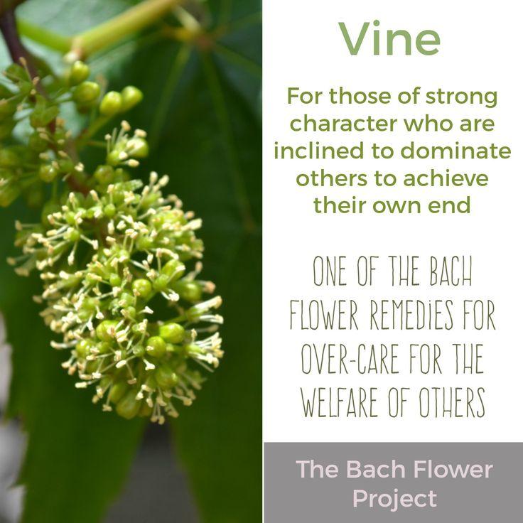 Bach Flower Remedy - VINE