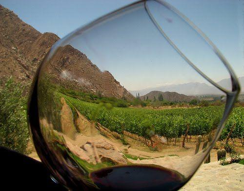 Un copa de vino entre viñedos
