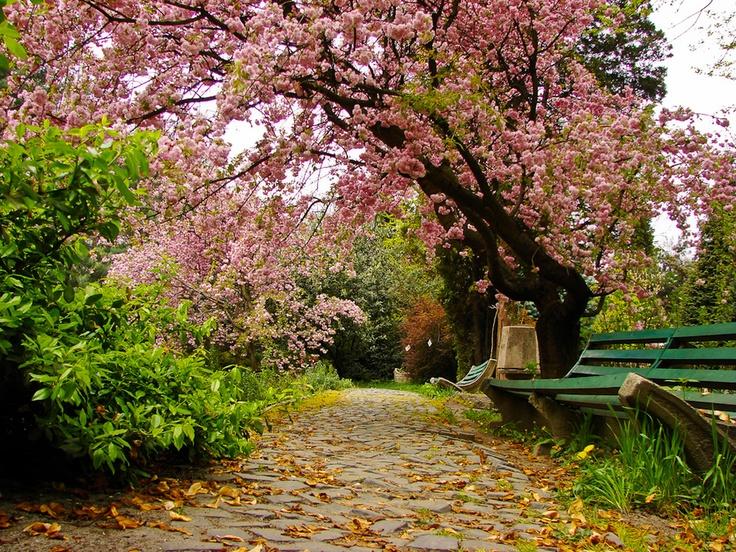 Botanic Garden, Uzhgorod