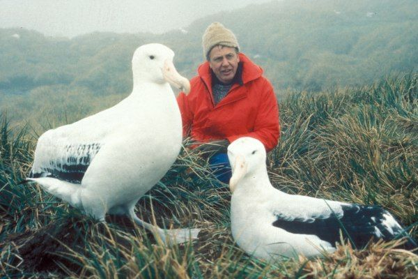 Sir David Attenborough and gull friends