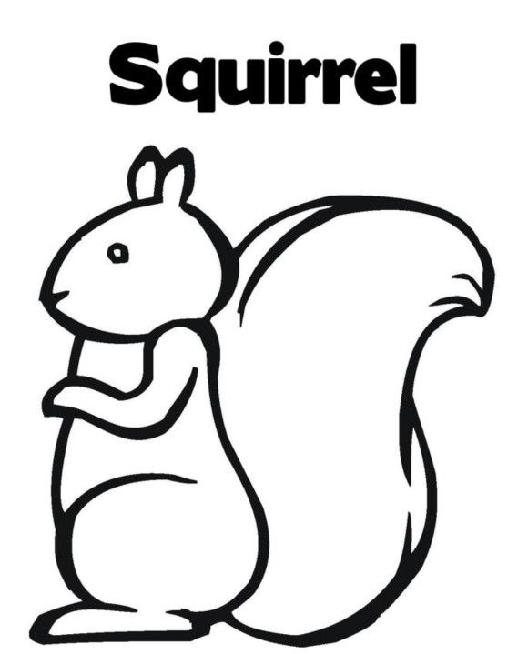 102 best coloring pages images on pinterest colouring for Coloring page of a squirrel