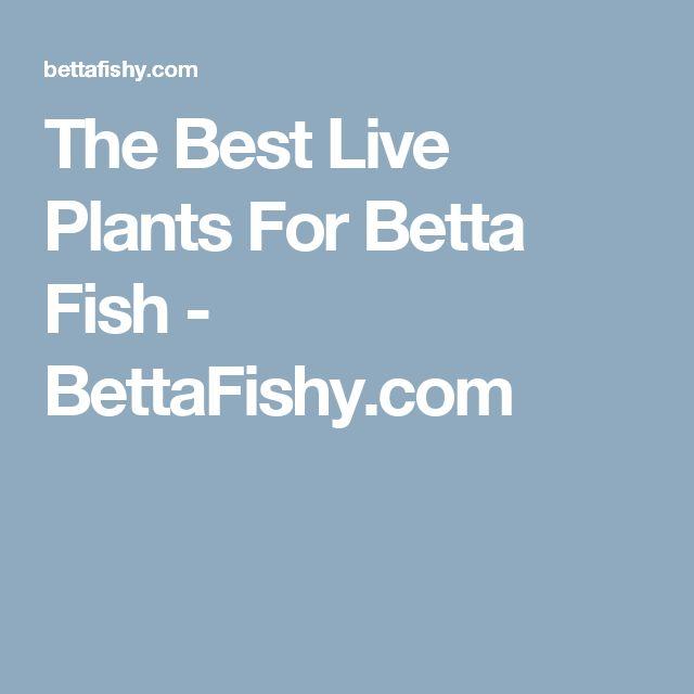 268 best fish images on pinterest aquarium fish for Best plants for betta fish