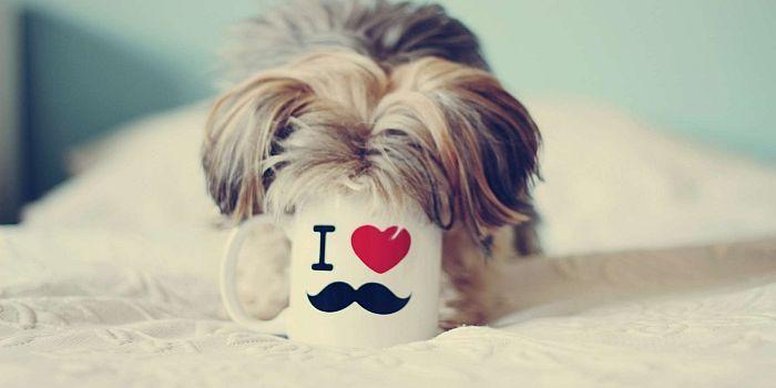 Psi fryzjer to stosunkowo nowy zawód w Polsce, ale zyskujący na popularności. Przeczytaj o zawodzie psiego fryzjera – ile zarabia, jakie są plusy i minusy oraz jak wygląda codzienna praca.