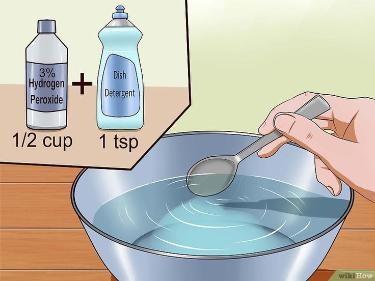 How to Remove Cat Urine Smell (with Pictures) - wikiHow