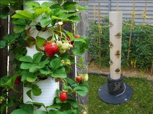 Homemade Diy Vertical Strawberry Planter Keeps The Pests 400 x 300